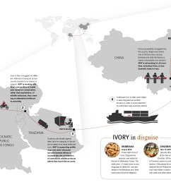 download the infographic to see the path of the ivory trade  [ 2434 x 1602 Pixel ]