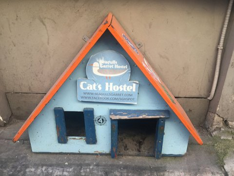 "Super cute cat ""hostel"" near my hostel in Riga, Latvia"