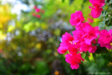 The Pavilions Phuket Thailand - A World to Travel-28