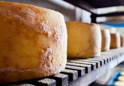Luna de Awara cheese factory