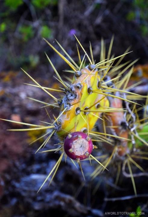 La Palma - Canary Islands- A World to Travel-19