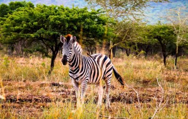 Phinda Private Game Reserve - South Africa - A World to Travel (70)