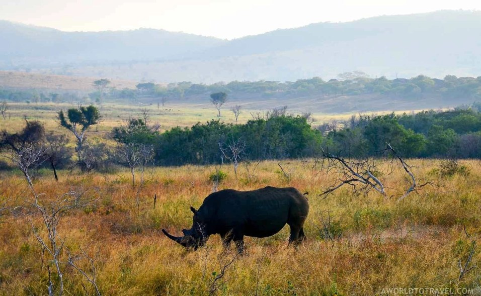 Phinda Private Game Reserve - South Africa - A World to Travel (96)