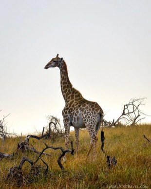 Phinda Private Game Reserve - South Africa - A World to Travel (98)