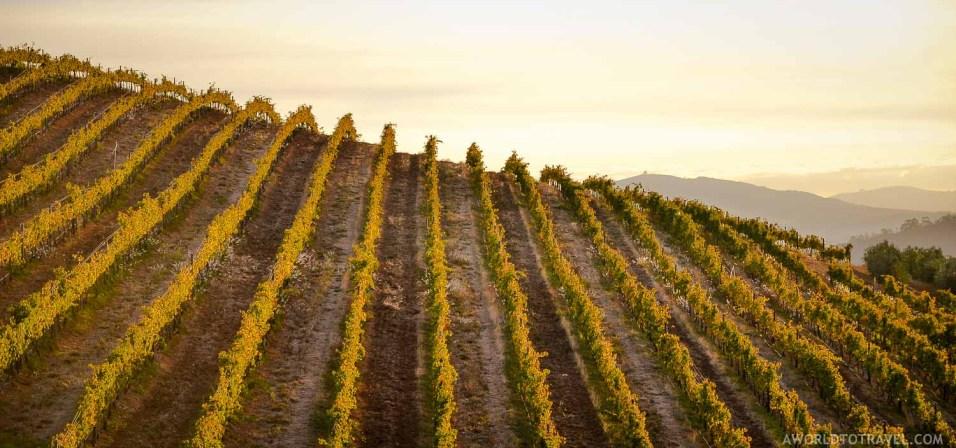 Sunset at an Stellenbosch Wineyard - Cape Winelands - South Africa - A World to Travel