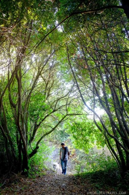 Walking the dog through the Galician forest by the beach - A World to Travel