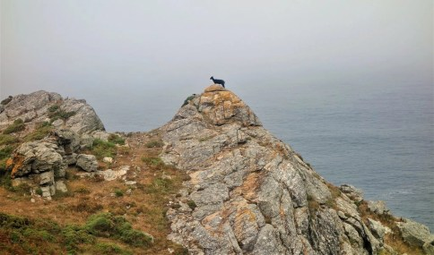 Goat on a Finisterre rock - Reasons That Will Make You Visit Galicia Soon - A World to Travel