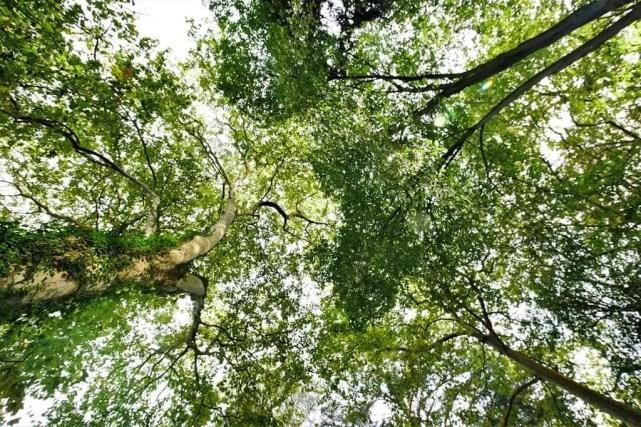 10. Atlantico Botanical Garden - Fun Things To Do In Gijon Rain or Shine - A World to Travel (1)