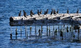 Boat ride from Combarro - Pontevedra Estuary - Terras de Pontevedra - A World to Travel (8)