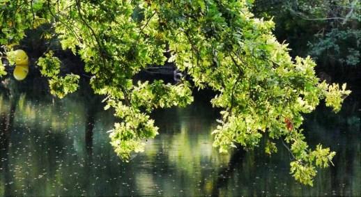 Playa Fluvial da Calzada - Rio Verdugo - Ponte Caldelas - Terras de Pontevedra - A World to Travel (4)