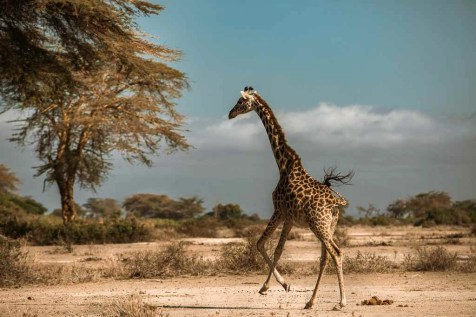 Tanzania - How To Travel Through Your Camera - Filmmaking Tips From A Travel Videographer - A World to Travel (11)
