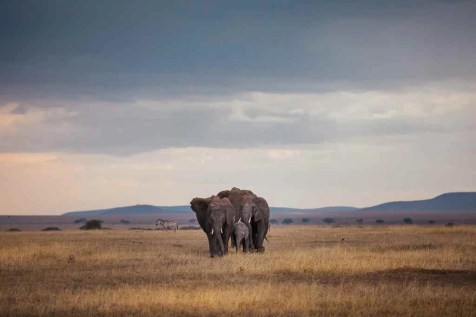 Tanzania - How To Travel Through Your Camera - Filmmaking Tips From A Travel Videographer - A World to Travel (27)