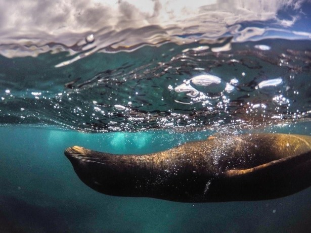 How To Plan Your Galapagos Trip As A Solo Traveler Without Breaking The Bank (8)