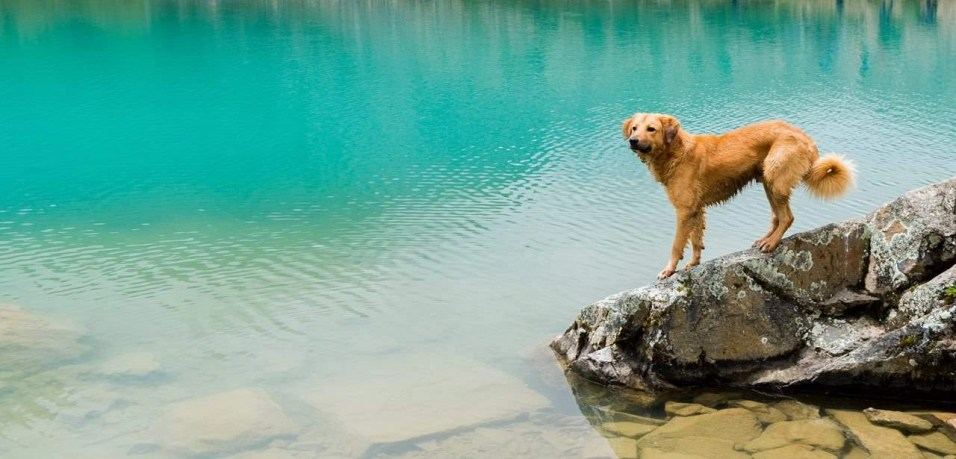 What You Need to Know About Getting an ESA - Emotional Support Animal Letter - A World to Travel (10)