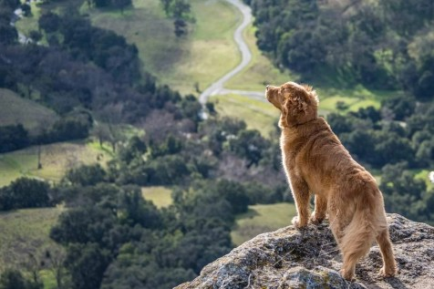 What You Need to Know About Getting an ESA - Emotional Support Animal Letter - A World to Travel (15)