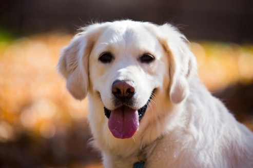 What You Need to Know About Getting an ESA - Emotional Support Animal Letter - A World to Travel (16)