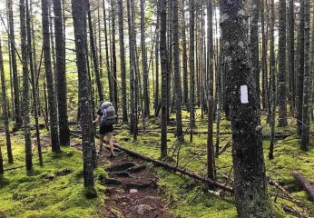 White Blaze - Thru Hiking The Appalachian Trail - What You Need To Know - A World to Travel
