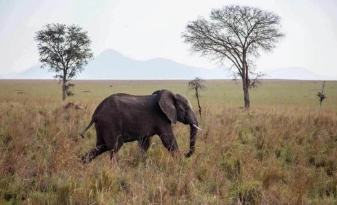Elephant at Kidepo Valley National Park - Best National Parks And Uganda Safaris - A World to Travel