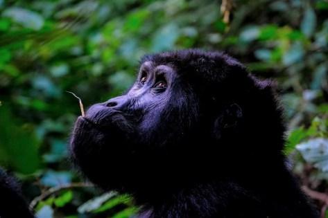 Kisoro - Best National Parks And Uganda Safaris - A World to Travel