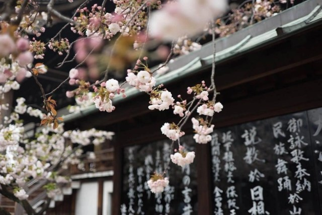 Useful Tips For Planning A Trip To Japan - A World to Travel (6)