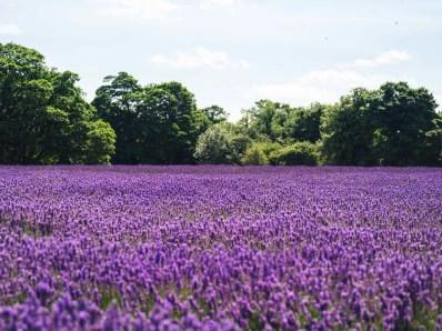 English garden - Inspiring Ideas For Lovely Travel-Themed Gardens - A World to Travel (2)