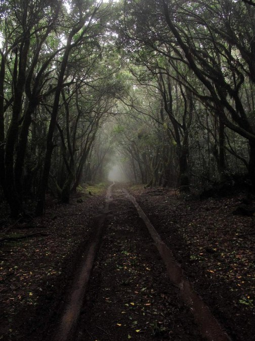 La Gomera laurisilva forest - A World to Travel