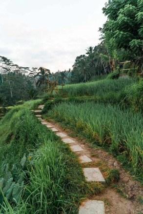 Ubud surroundings - A World to Travel