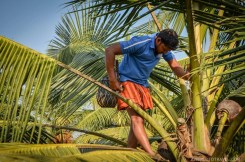 What Makes Kerala Special - Human by Nature - A World to Travel-35