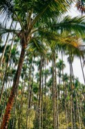 What Makes Kerala Special - Human by Nature - A World to Travel-84