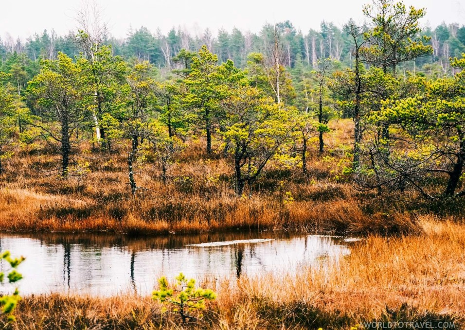 Bog walking in Kemeri National Park - Fun things to do in Latvia - A World to Travel (4)