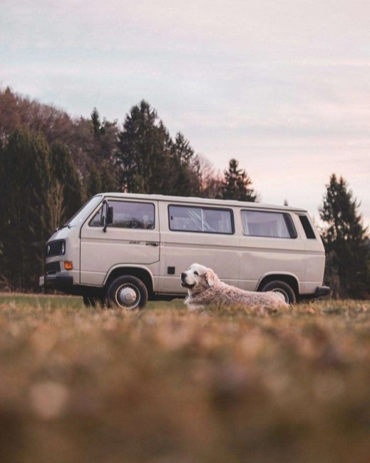 Dog in front of an old van, forest and grass field in Austria