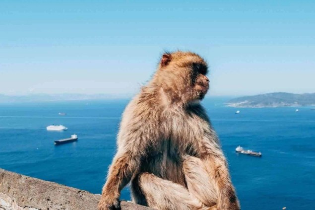 Gibraltar has the only wild monkey population in all Europe
