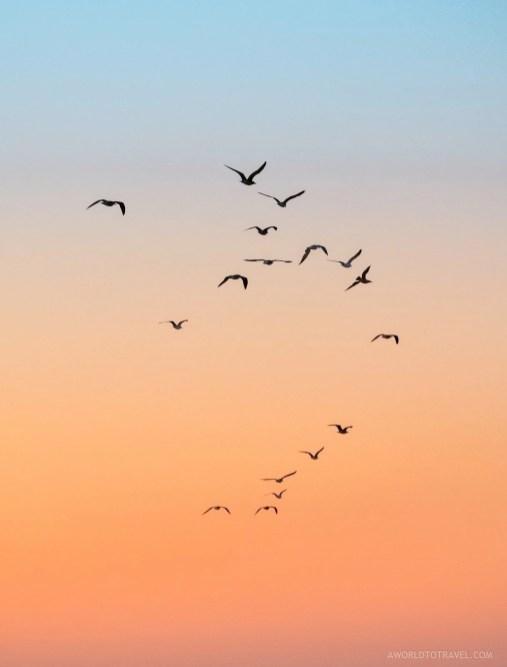Seagulls in the West Portuguese coast - Porto to Lisbon campervan trip