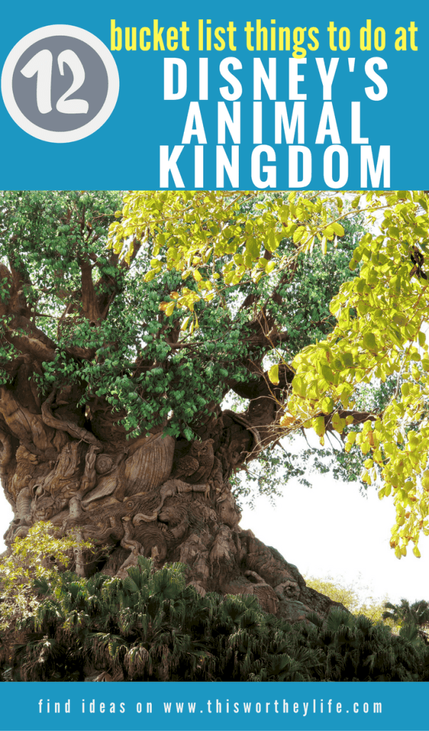 Are you headed to Orlando and looking for the best Things to do in Disney's Animal Kingdom?  Look no further than our amazing list chock full of great tips and tricks for making the most of your time at Walt Disney World and Animal Kingdom.