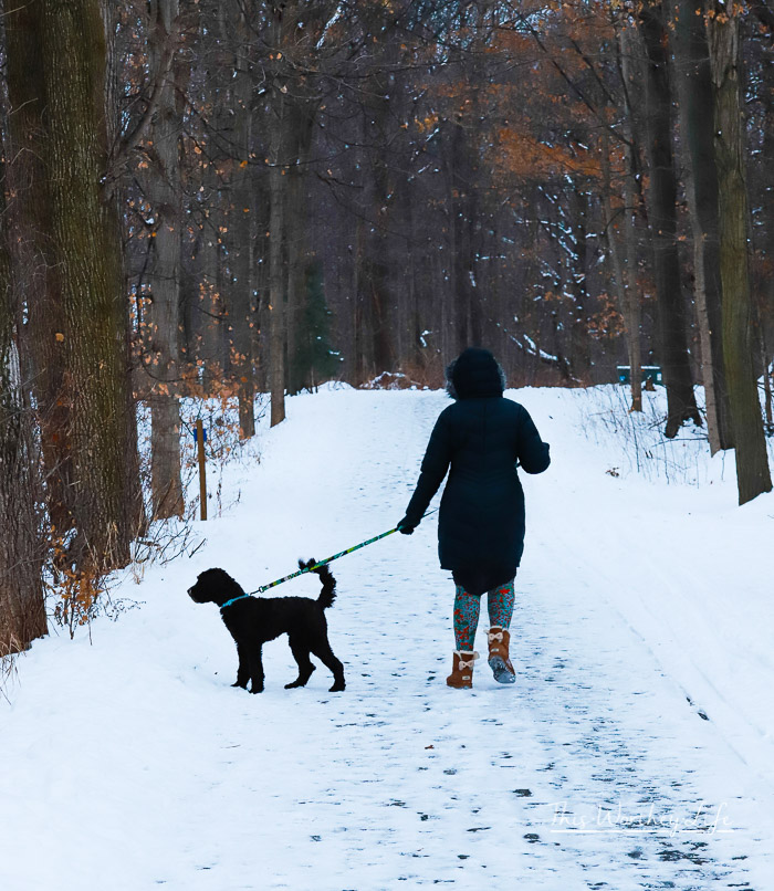 African American woman walking a chocolate labradoodle on a winter's day