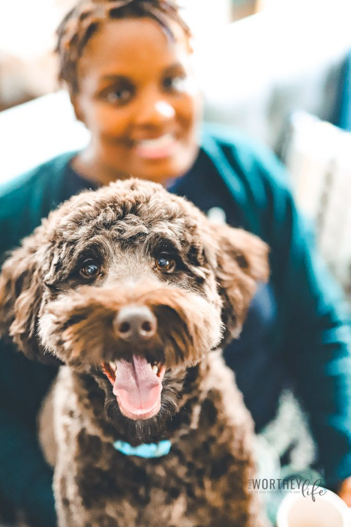The Best Dog Christmas Presents {Especially a Labradoodle}