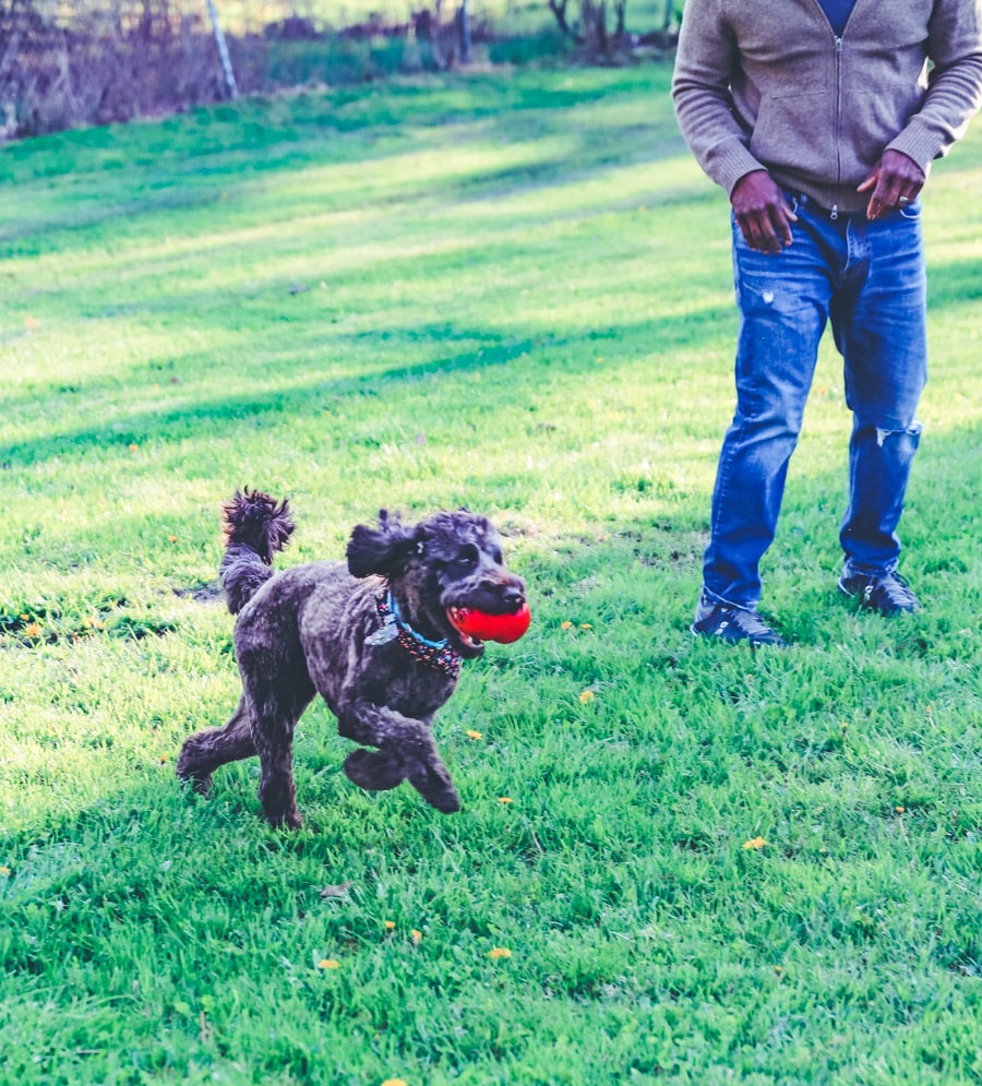 Best Toy Gifts for Dogs