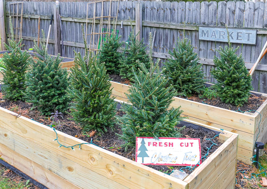 Mini Christmas Tree Farm idea