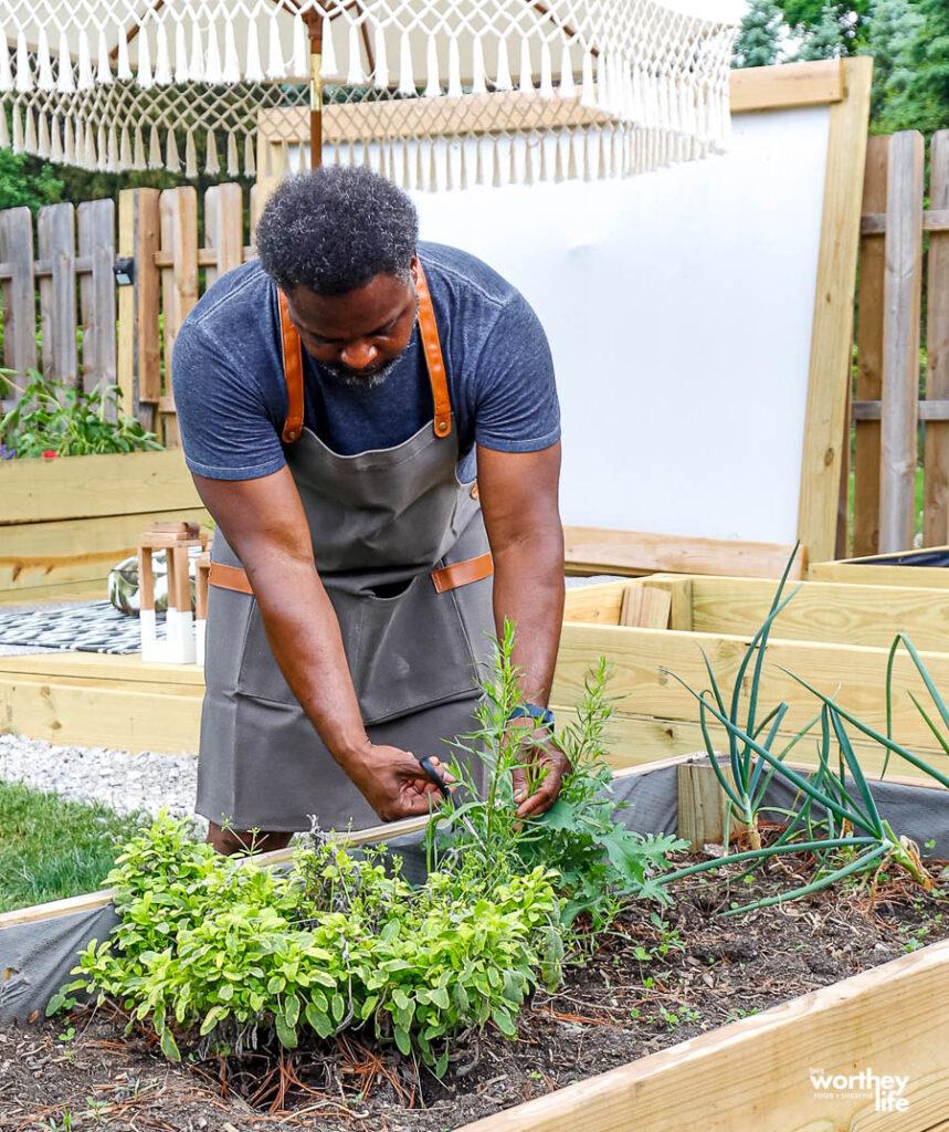 a black man harvesting herbs from a garden