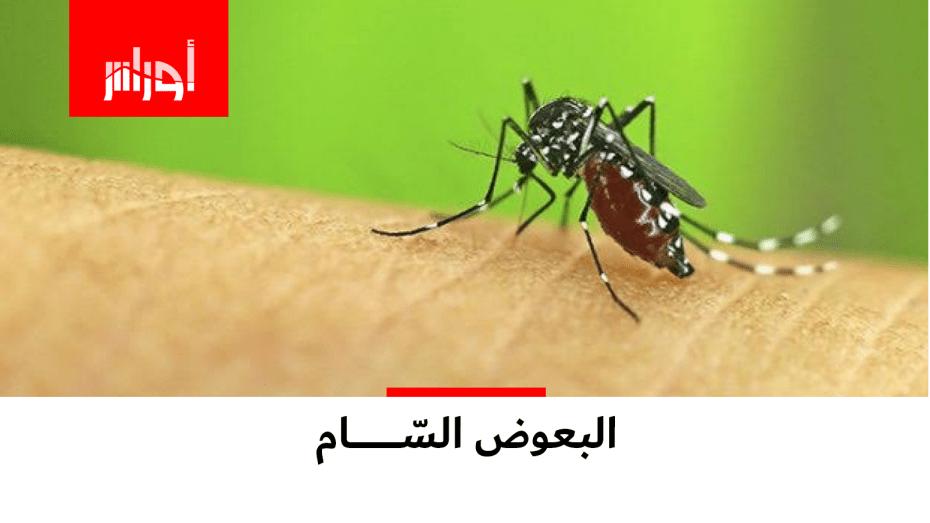 نوع خطير من البعوض يظهر في ولاية #سكيكدة.. شاهد ما الذي تسبب فيه