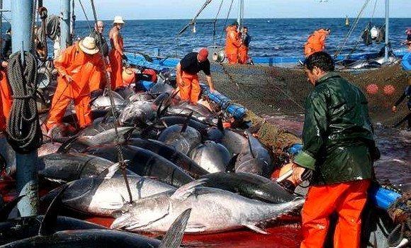 1.650 طن حصة الجزائر من صيد للتونة