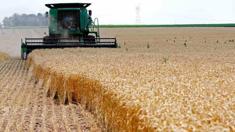 الجزائر تغيير موصفات القمح المُقتنى