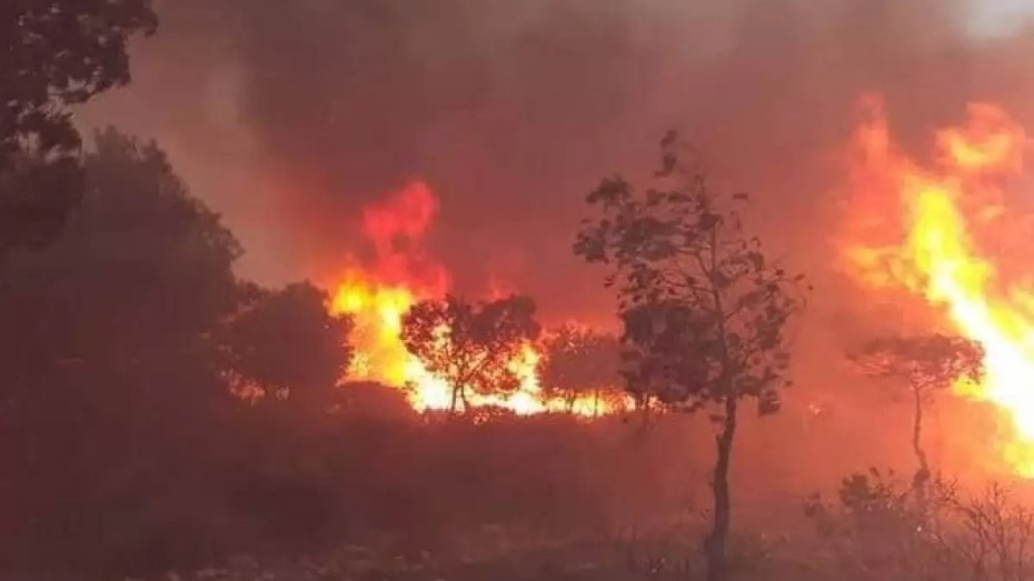 تعرّف على مخلّفات حرائق الغابات بتيبازة