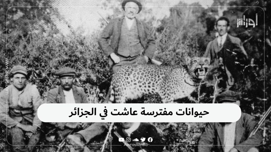 حيوانات مفترسة عاشت في الجزائر