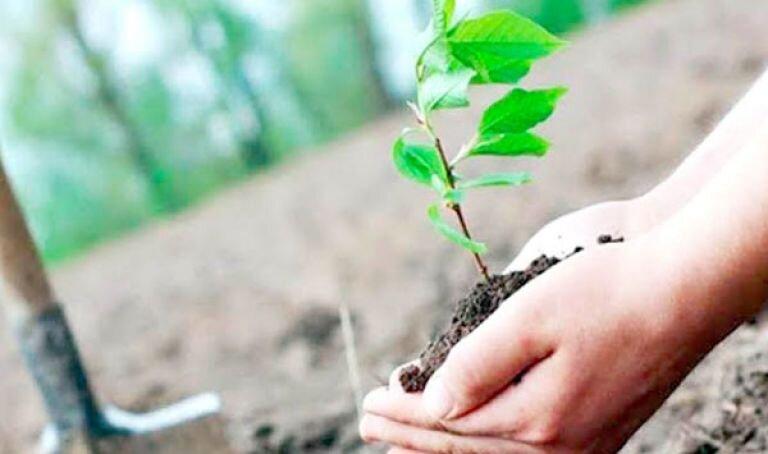 مياه الوضوء لغرس 15 مليون شجرة!