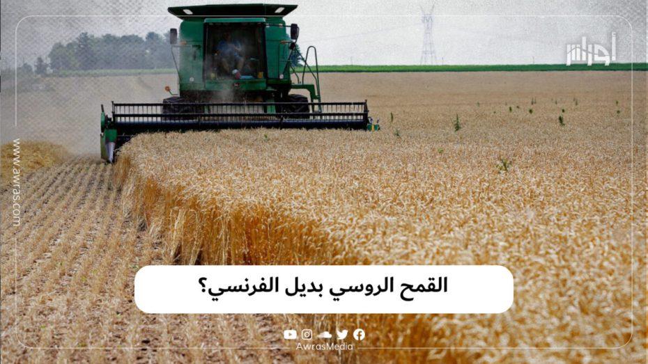 القمح الروسي بديل الفرنسي؟