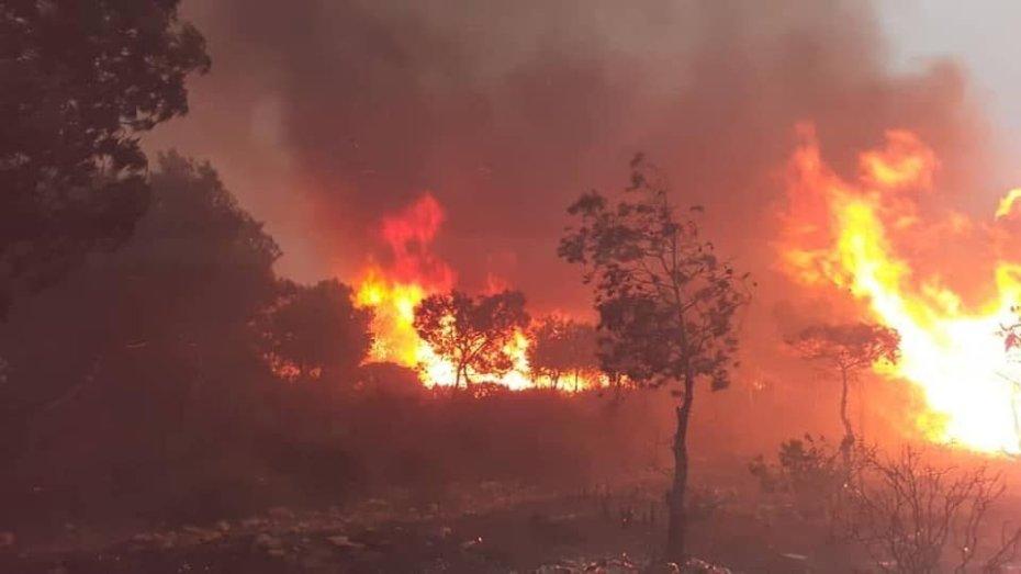 التحضير لمشروع قانون بخصوص جرائم حرق الغابات تصل عقوبتها إلى المؤبد