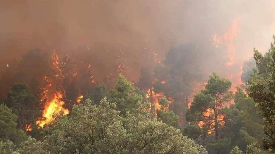وزير الفلاحة يكشف حصيلة الخسائر التي تسببت فيها حرائق الغابات