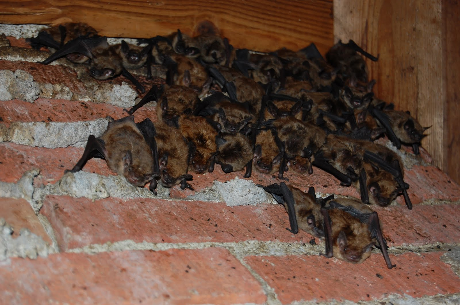 How To Get Rid Of Pests In Your Attic