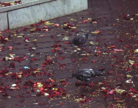 Die grauen Tauben sind hungrig